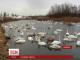 На Буковині у природному заповіднику загинув цілий виводок лебедів-шипунів