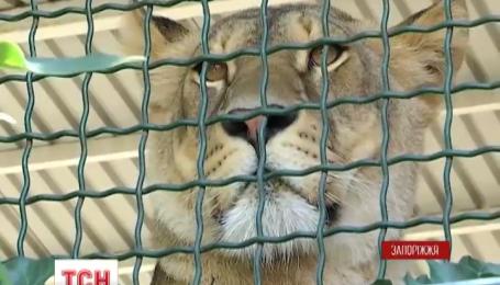 Кошачье пополнение в зоопарке Бердянска