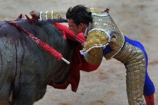 В Испании во время выступления бык убил матадора впервые за последние 30 лет