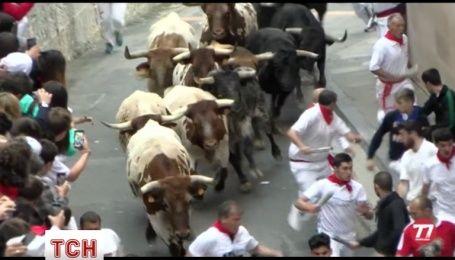 В Іспанії триває шостий день забігів з биками: п'ятеро людей отримали травми