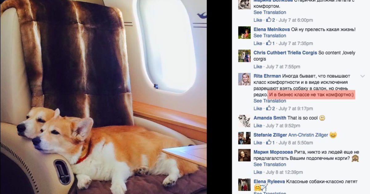 Собака у літаку Шувалова