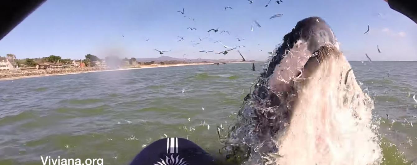 У Мережі з'явилося неймовірне відео, як зграя китів атакувала сап-бордистів посеред океану
