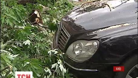 В Киеве дерево упало на автомобили пограничников и сотрудников СБУ