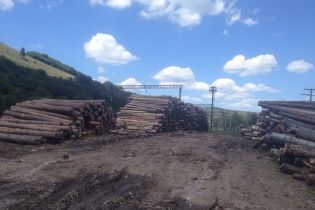 На Київщині селяни заблокували дорогу через масову вирубку лісу