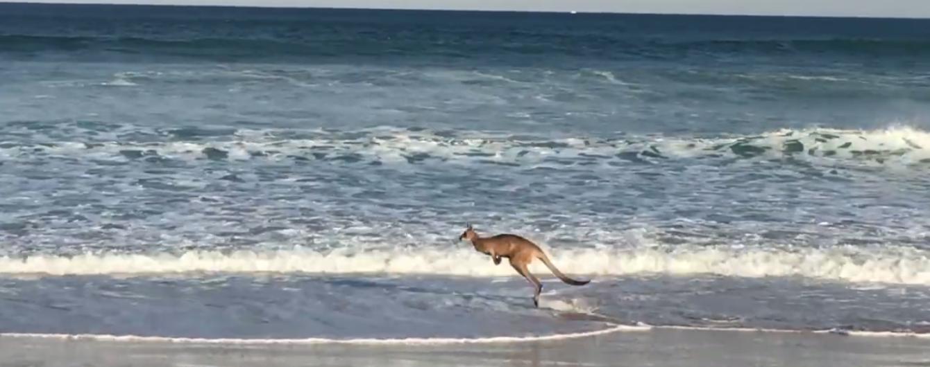 Чоловік, що 10 діб чекав на кохану на летовищі та щасливий кенгуру на узбережжі океану. Тренди соцмереж