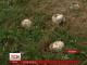 Журналіст ТСН з'ясували подробиці отруєння грибами на Львівщині