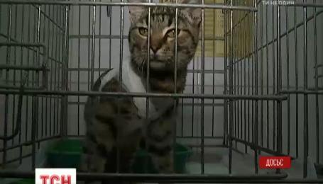 Зоозахисники завітали на суд над чоловіком, що влаштував екзекуцію коту