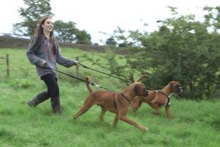 В Британии собака родила клонов умершего пса