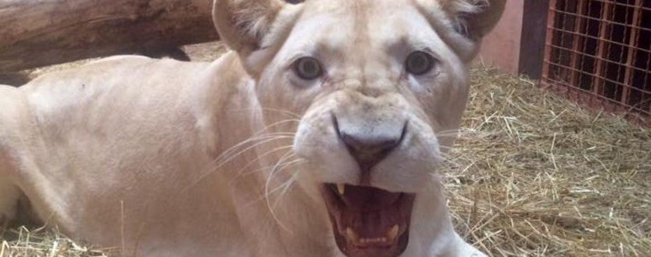В Україні запрацював рекордний контактний зоопарк