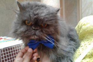 В Украине умер самый старый котик