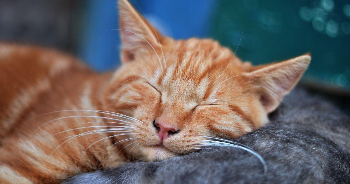 Музыка для котов. В Британии записали диск исключительно для четвероногих
