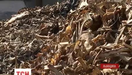 Горы костей, дохлые животные и отравлена земля: на Львовщине костомельний завод работает, нарушая санитарные нормы