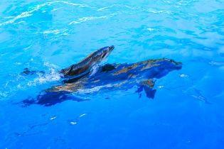 В оккупированном Крыму погибли украинские боевые дельфины - постпред президента