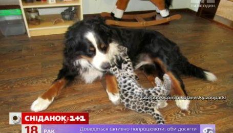 В Николаеве собака стала нянькой для маленького ягуара