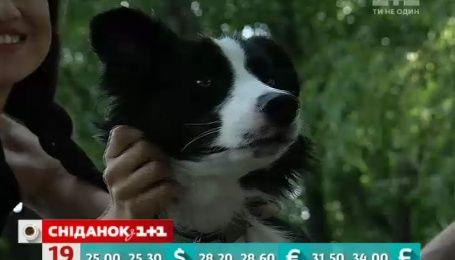 Тварини в руках аферистів: як шахраї заробляють на загублених улюбленцях