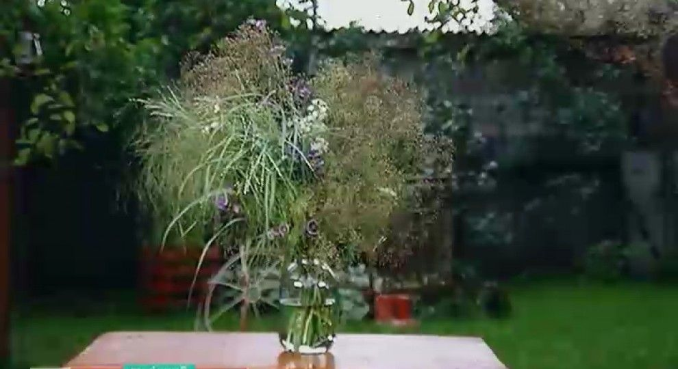 Відео - Як виростити модний квітник - основні правила - Сторінка відео f4177685e9f62