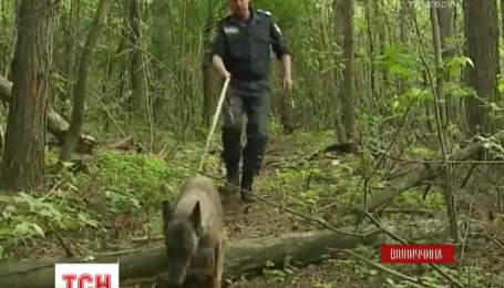 Спали в кукурузе: на Винниччине полиция с собаками, люди и самолет искали пропавших детей