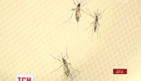 Ученые спрогнозировали эпидемию вируса Зика на двух континентах