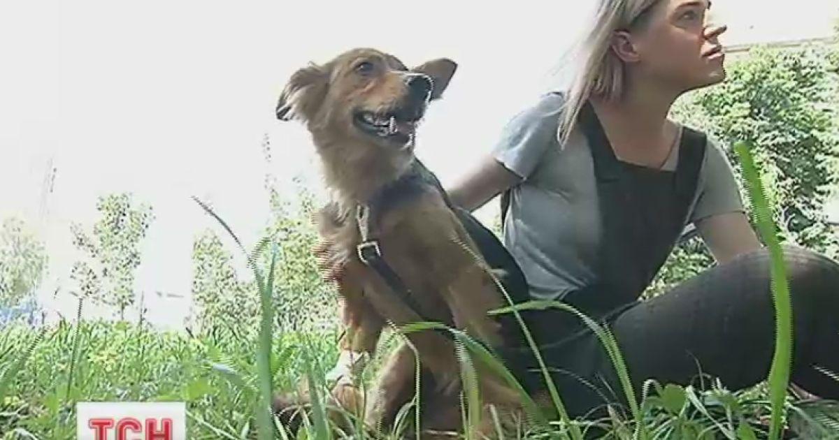 Бездомная собака Майя благодаря ТСН получила новую семью