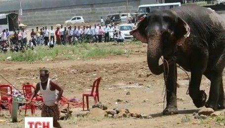 Цирковая слониха держала в страхе тысячи людей в индийском городе Пуна