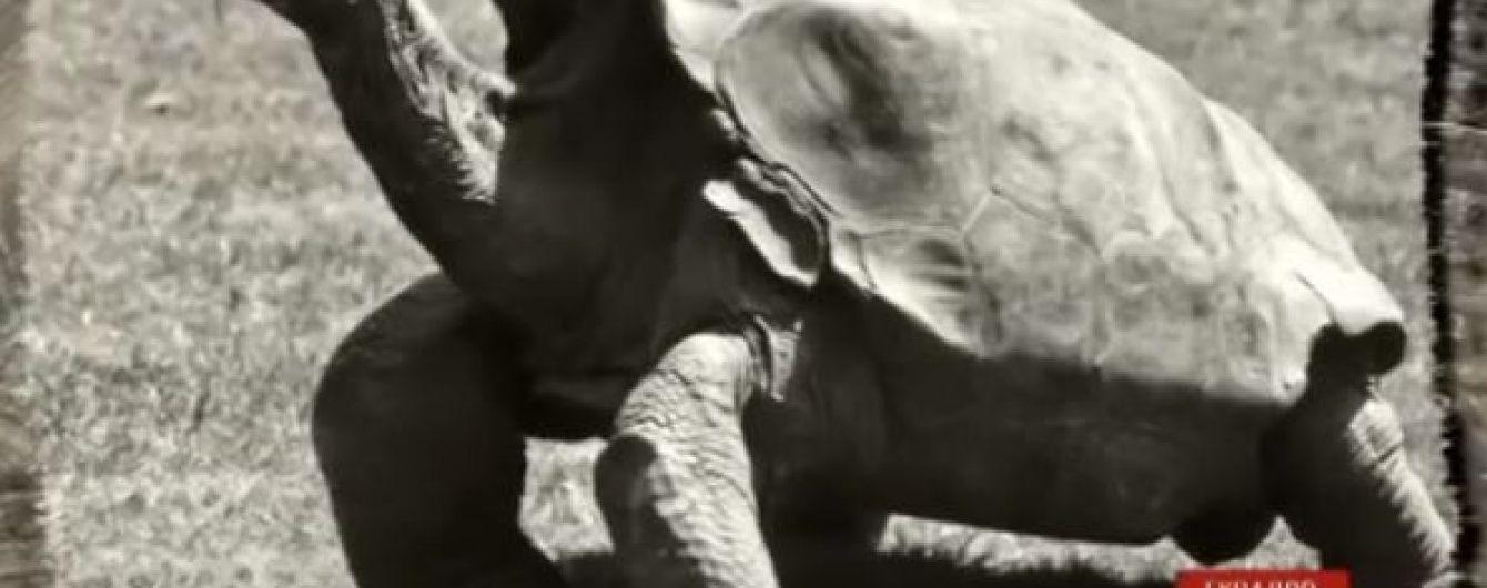 Самець черепахи на ім'я Дієго врятував свій вид від вимирання