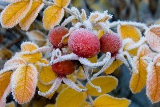 В Украину заходит арктический воздух, который принесет заморозки. Прогноз погоды на 26-30 сентября