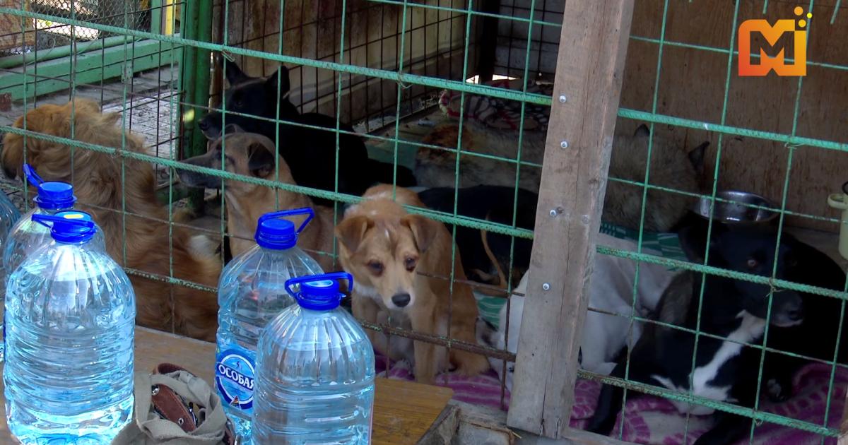 установка данного приют для животных в кемерово фото забот городских