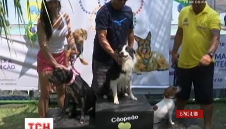 У Бразилії вперше влаштували Олімпійські ігри для собак