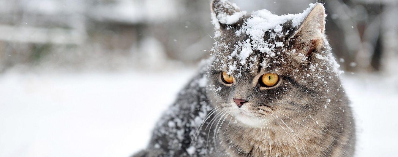 Українцям прогнозують затяжну і люту зиму, яка буває раз на 32 роки