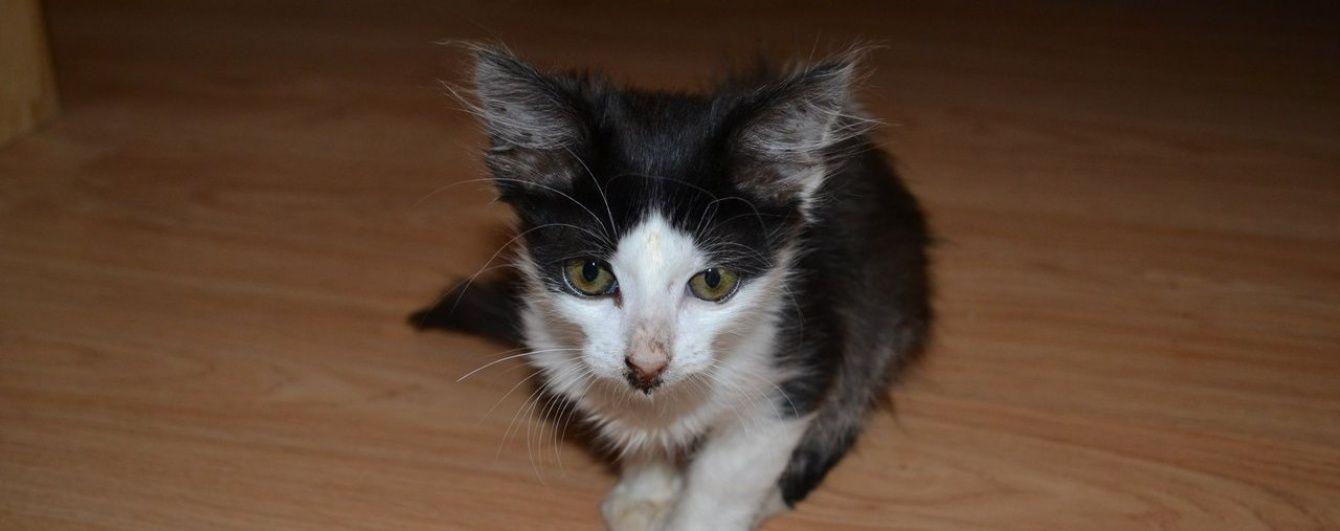 Померло кошеня, яке у Луцьку замордували живодери