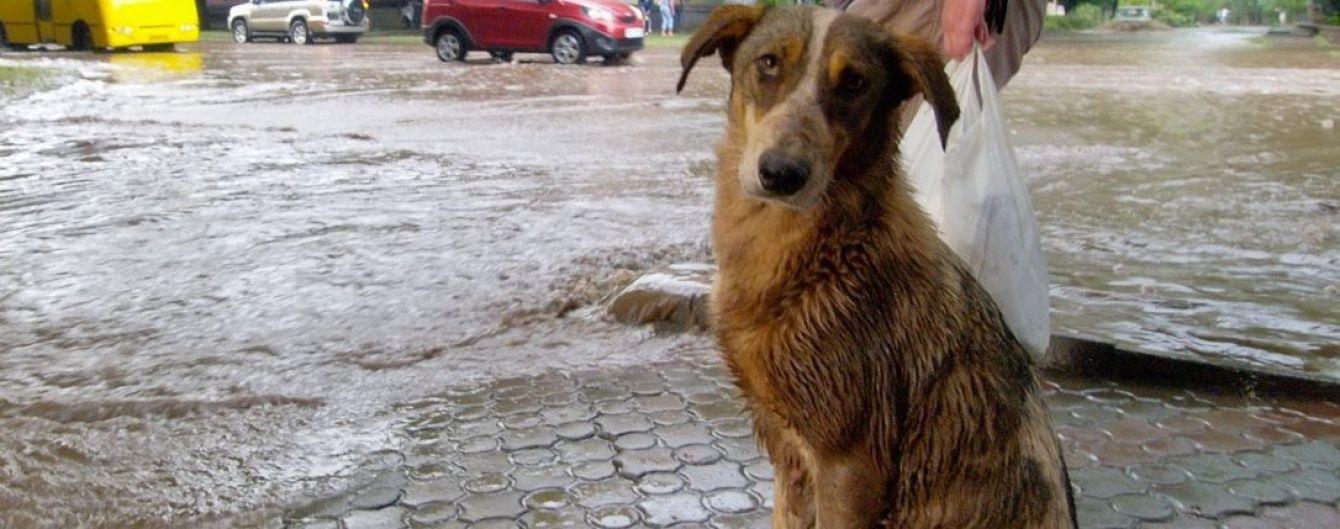 Дніпровські волонтери підшукують для тварин-інвалідів господарів за кордоном