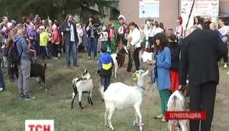 На Тернопольщине выбирали самую красивую козу