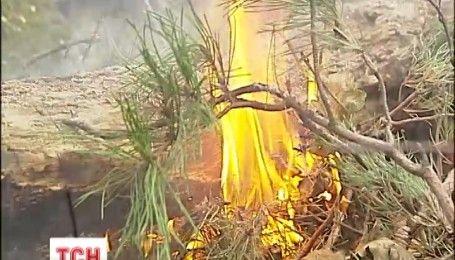 На Київщині через недбальство лісників горить заповідний ліс