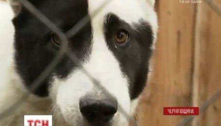 В селе Мнев на Черниговщине массово исчезают собаки
