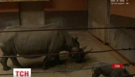 У зоопарку Південної Дакоти показали немовля рідкісного східного чорного носорога