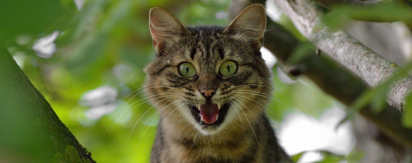 Співочий кіт та стрибок екстремала з 40-метрового будинку. Тренди Мережі