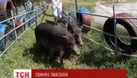 Китайские фермеры устроили свиной триатлон в контактном зоопарке