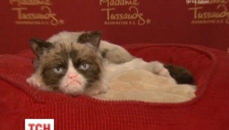 Самый известный в мире сердитый кот отправился в гастроли