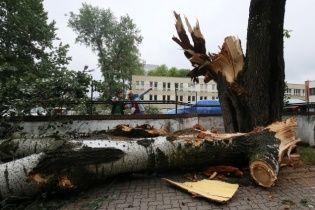 Поранені люди та поламані дерева: Польщу атакували руйнівні буревії