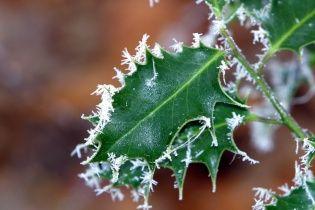 Ночные заморозки и мокрый снег: погода на 14 марта