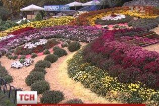 У Києві склали рекордну 112-метрову композицію з квітів