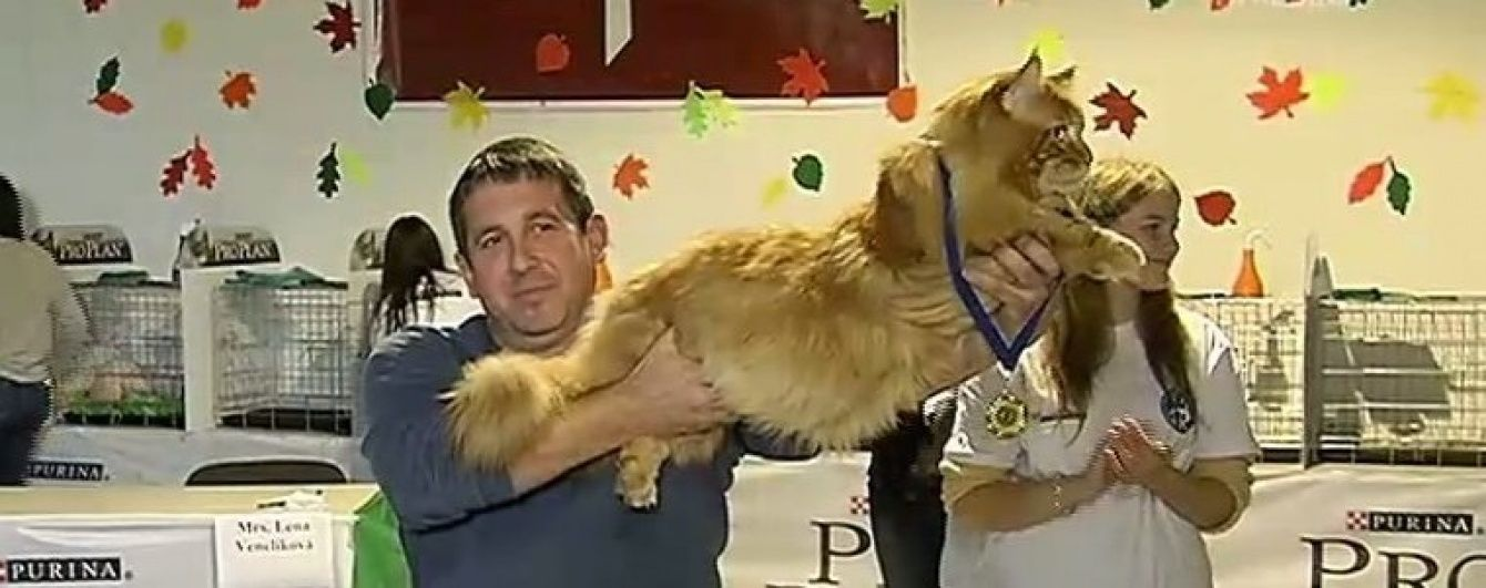 """Найважчий кіт України має 9 """"дружин"""" і щодня з'їдає 0,5 кг сирого м'яса"""
