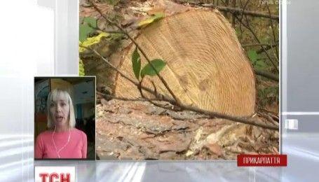 На Прикарпатье жители нескольких сел выступают против незаконной вырубки леса