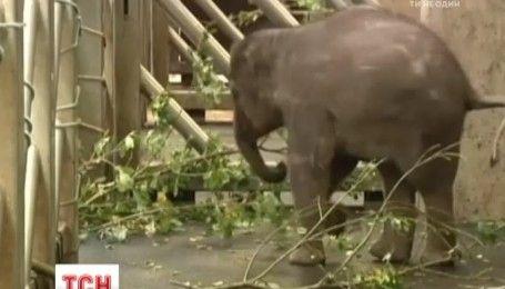 В Пражском зоопарке показали новорожденного слоненка