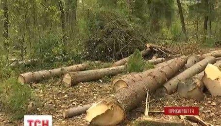 Жители трех сел на Прикарпатье обвиняют лесников в вырубке ценной древесины