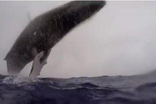 Австралійський фотограф зблизька зняв на відео дивовижний стрибок 36-тонного кита