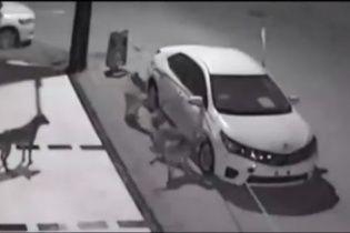 У Туреччині голодні собаки намагалися з'їсти автомобіль
