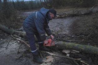 Через сильний вітер на Вінничині дерево впало на 16-річну дівчину