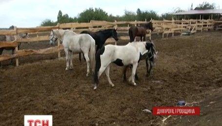 На Дніпропетровщині волонтери намагаються добудувати притулок для коней до наступу холодів