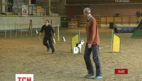 Соперничество собак: во Львове состоялись соревнования из довольно редкого для Украины вида спорта